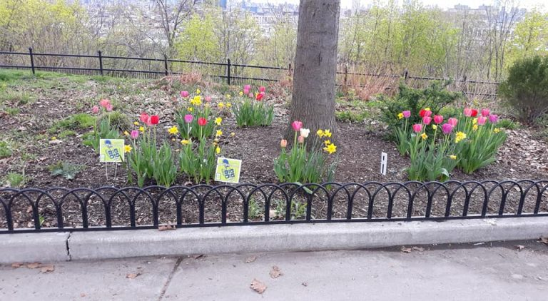 Flowers in Riverview-Fisk park planted during the Big Dig